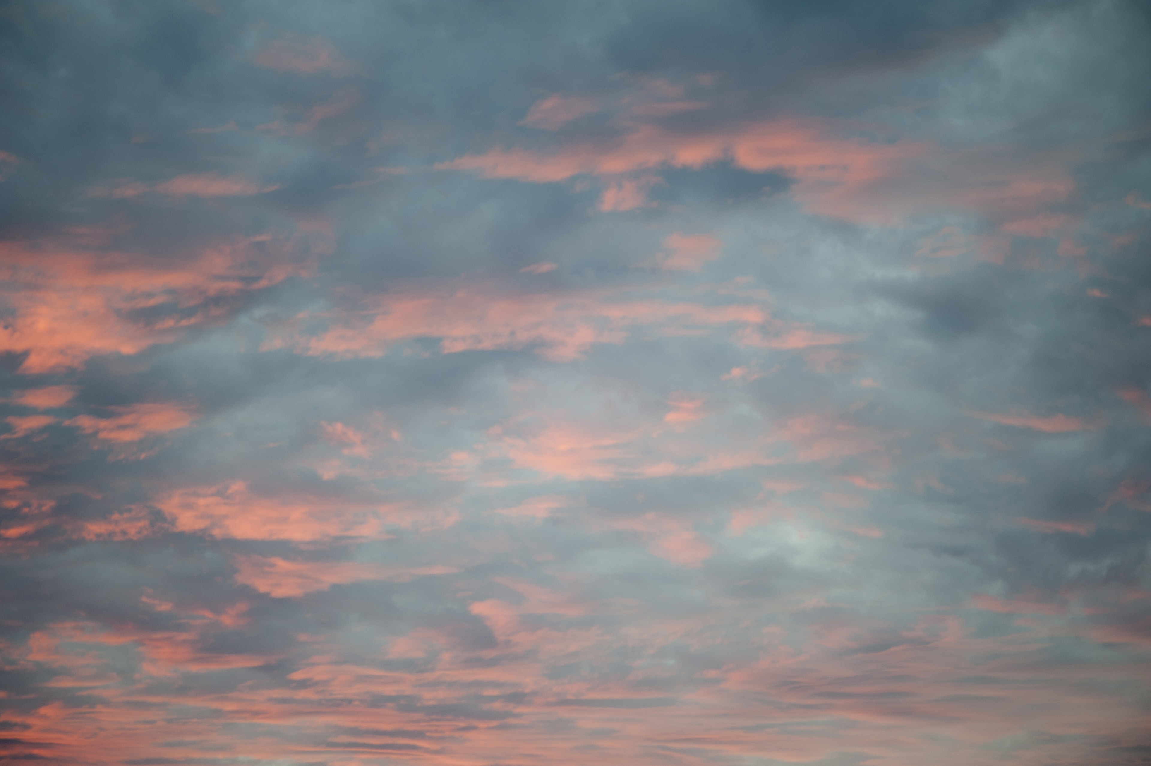 Delicate pink sunset reflected on scattered fluffy clouds in a soft blue sky for an atmospheric nature and weather background panorama
