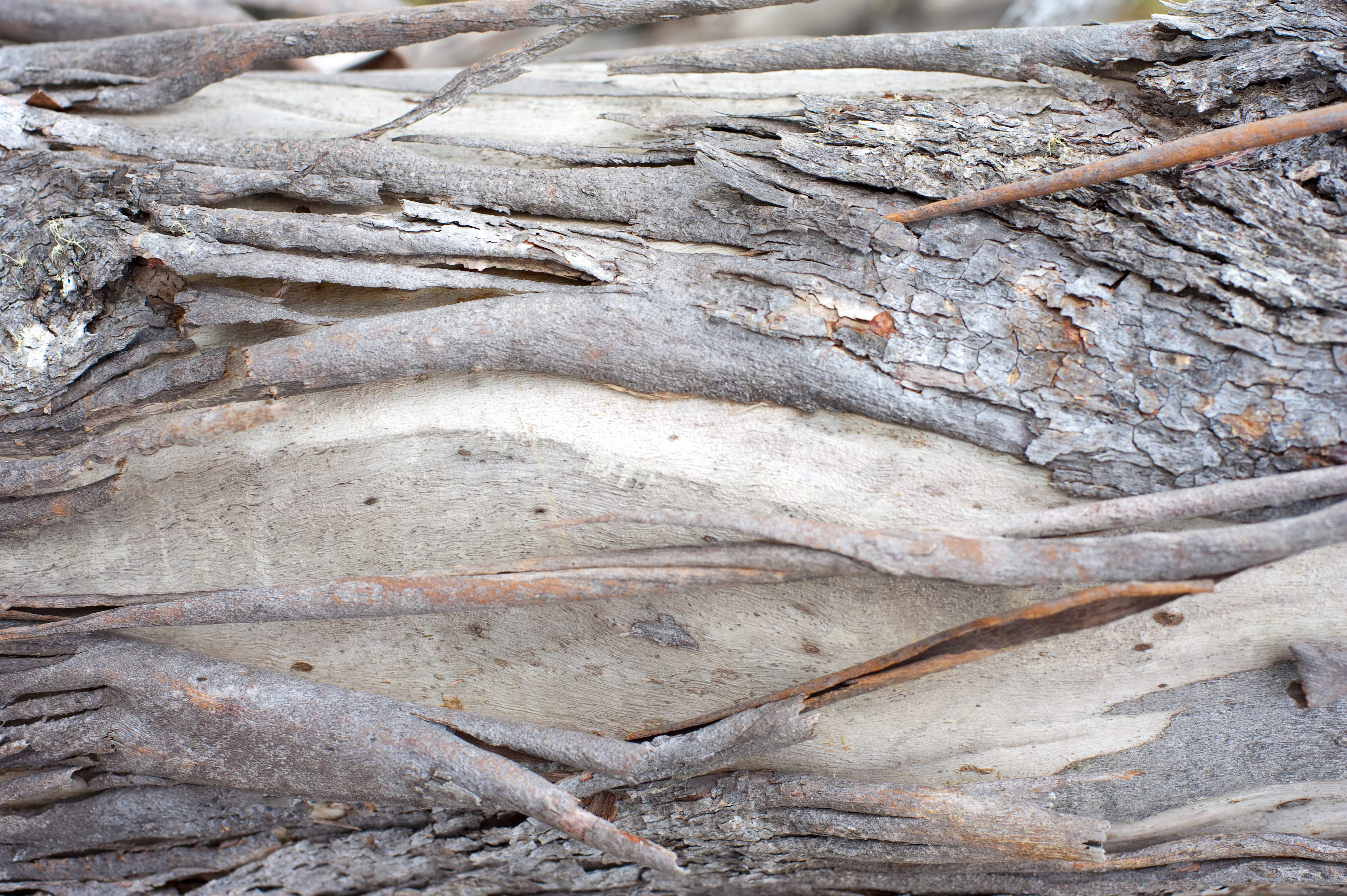 Old dried bark on a tree trunk showing where the fronds have become detached and fallen, closeup background texture