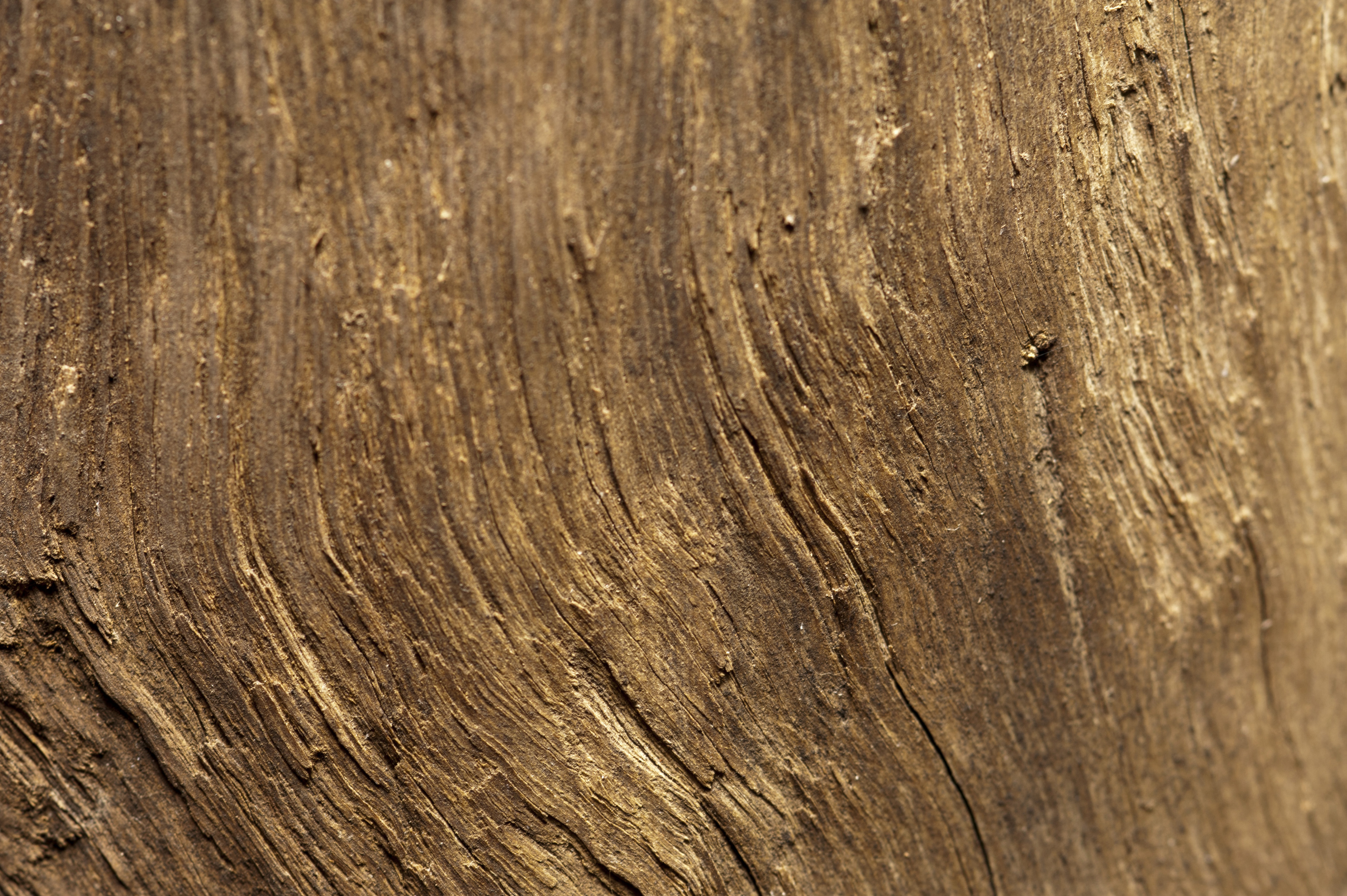 Background texture of rough weathered natural wood with a fiber like surface pattern