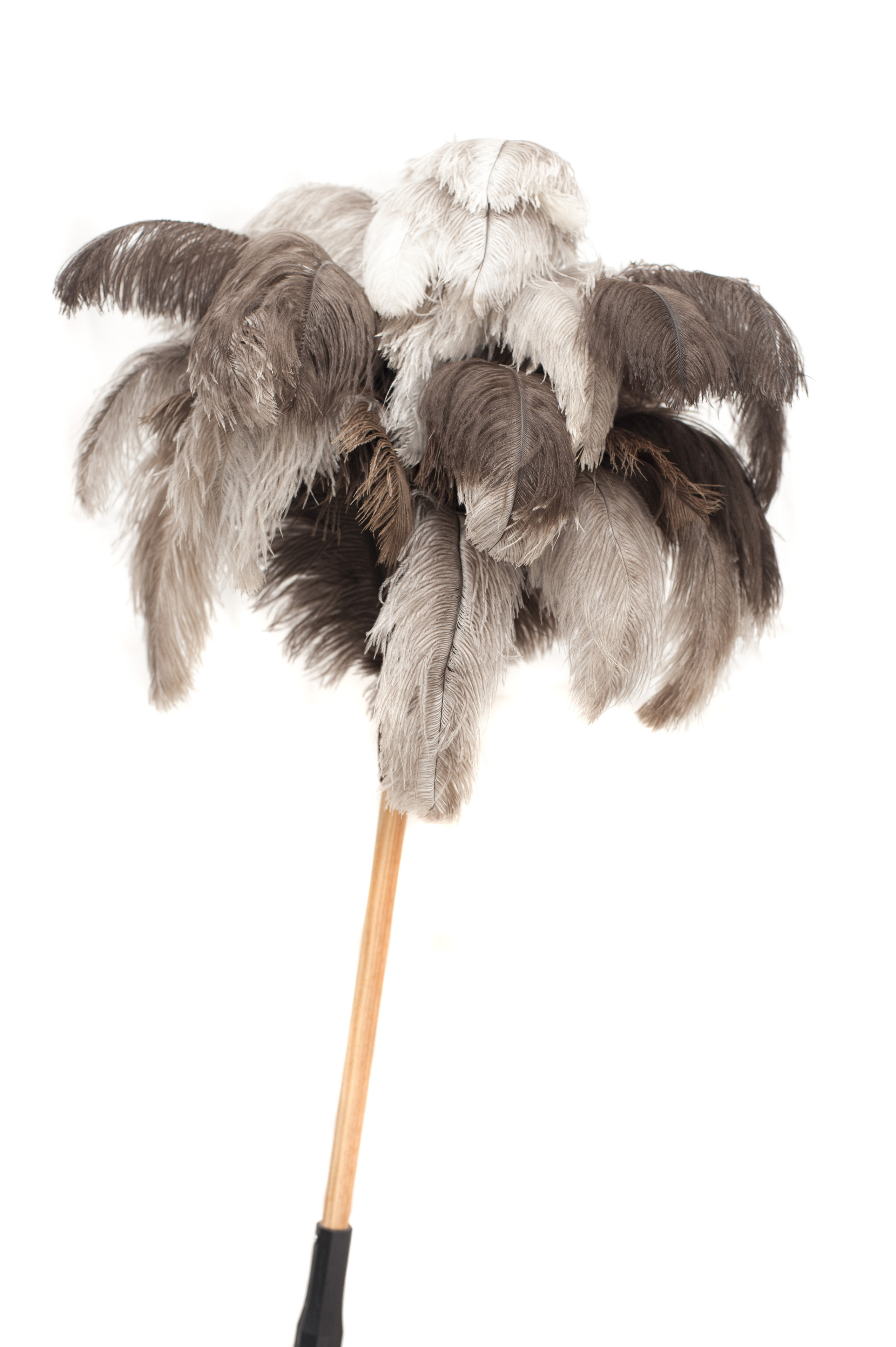 Large feather duster with natural ostrich plumes and a long wooden handle for cleaning the ceiling in a household chores and hygiene concept