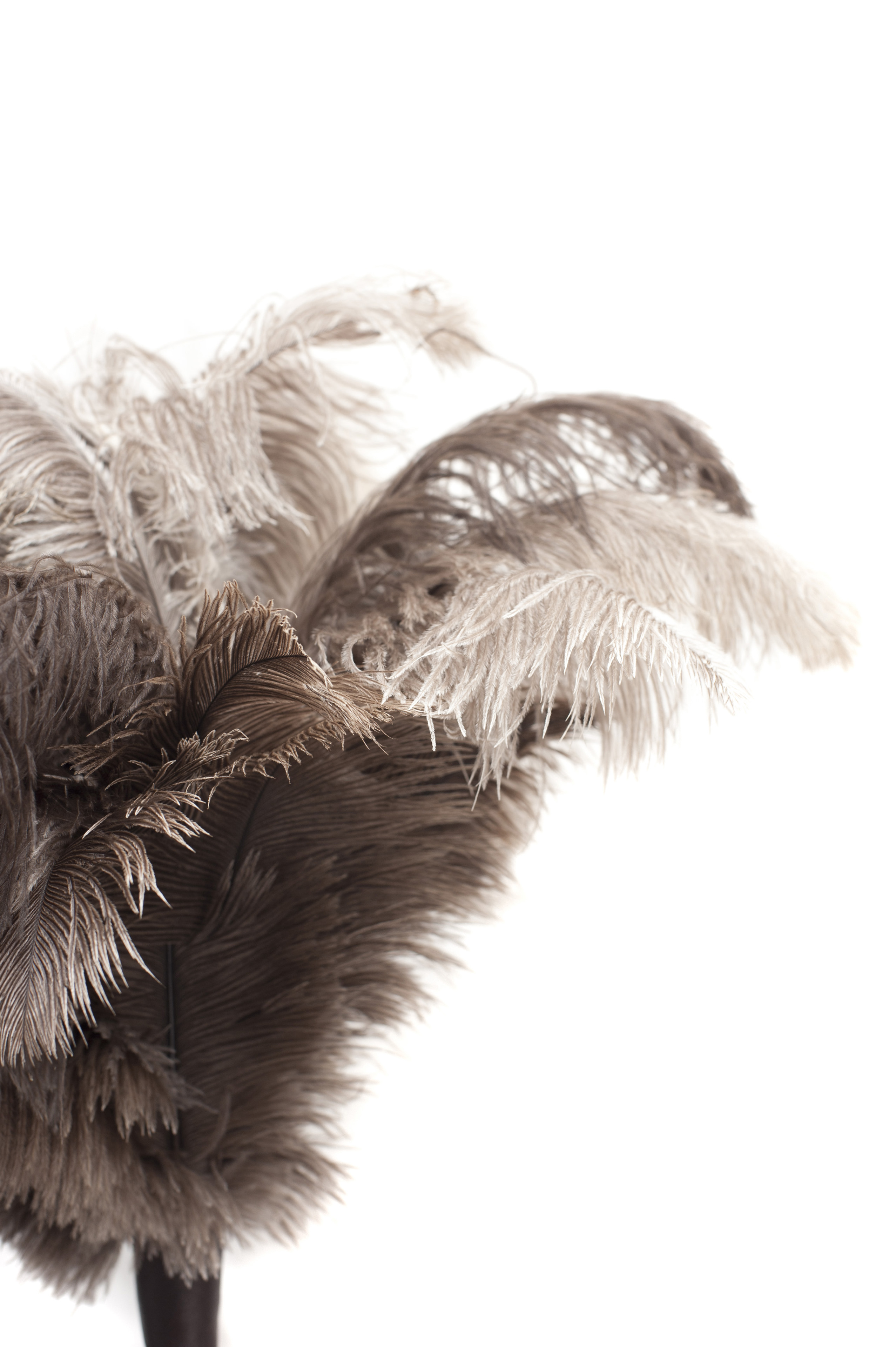 Close up Brown Gray Feather Duster on White Background, Emphasizing Copy Space for Texts.