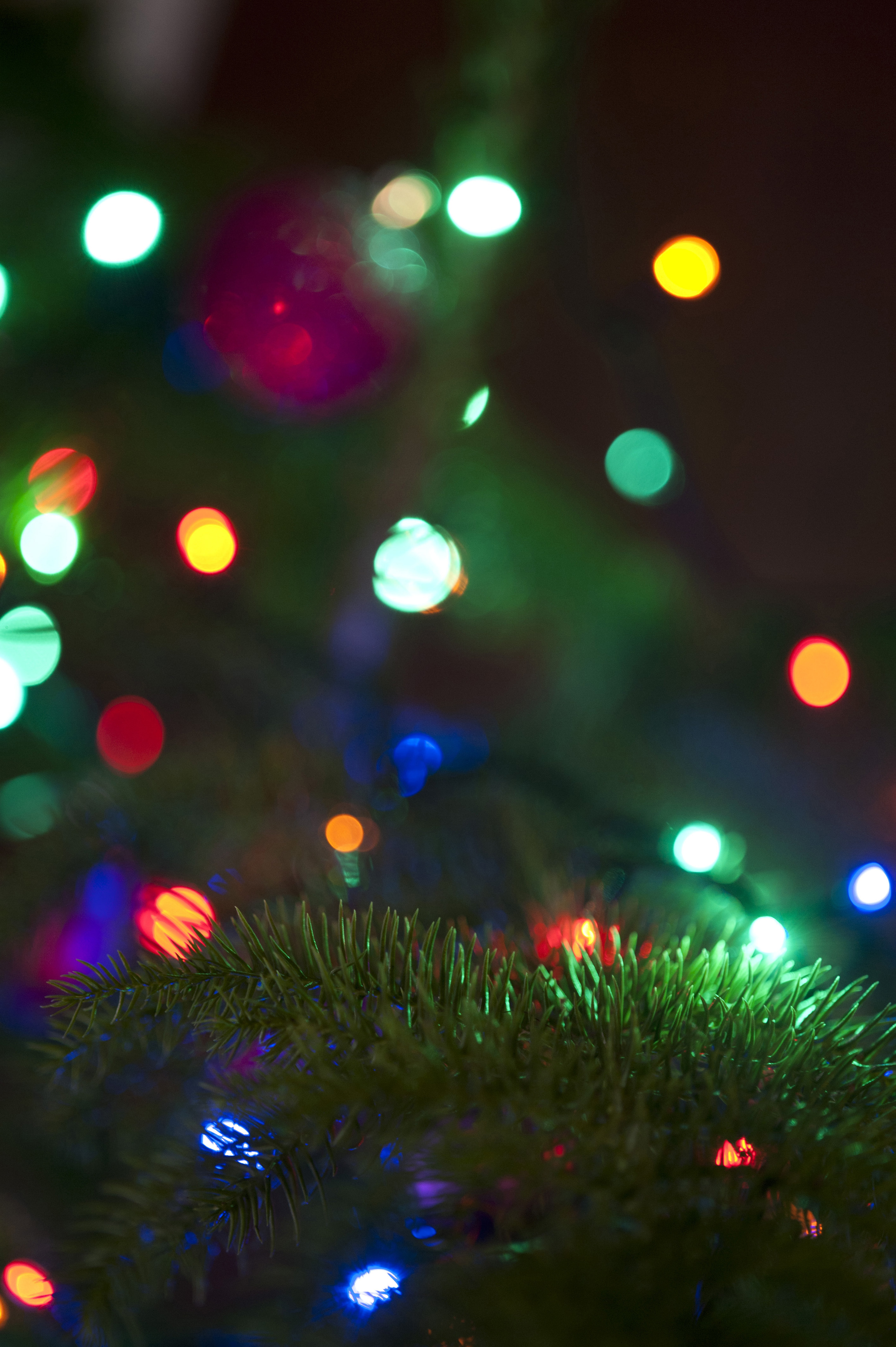 Image Result For Christmas Tree Online