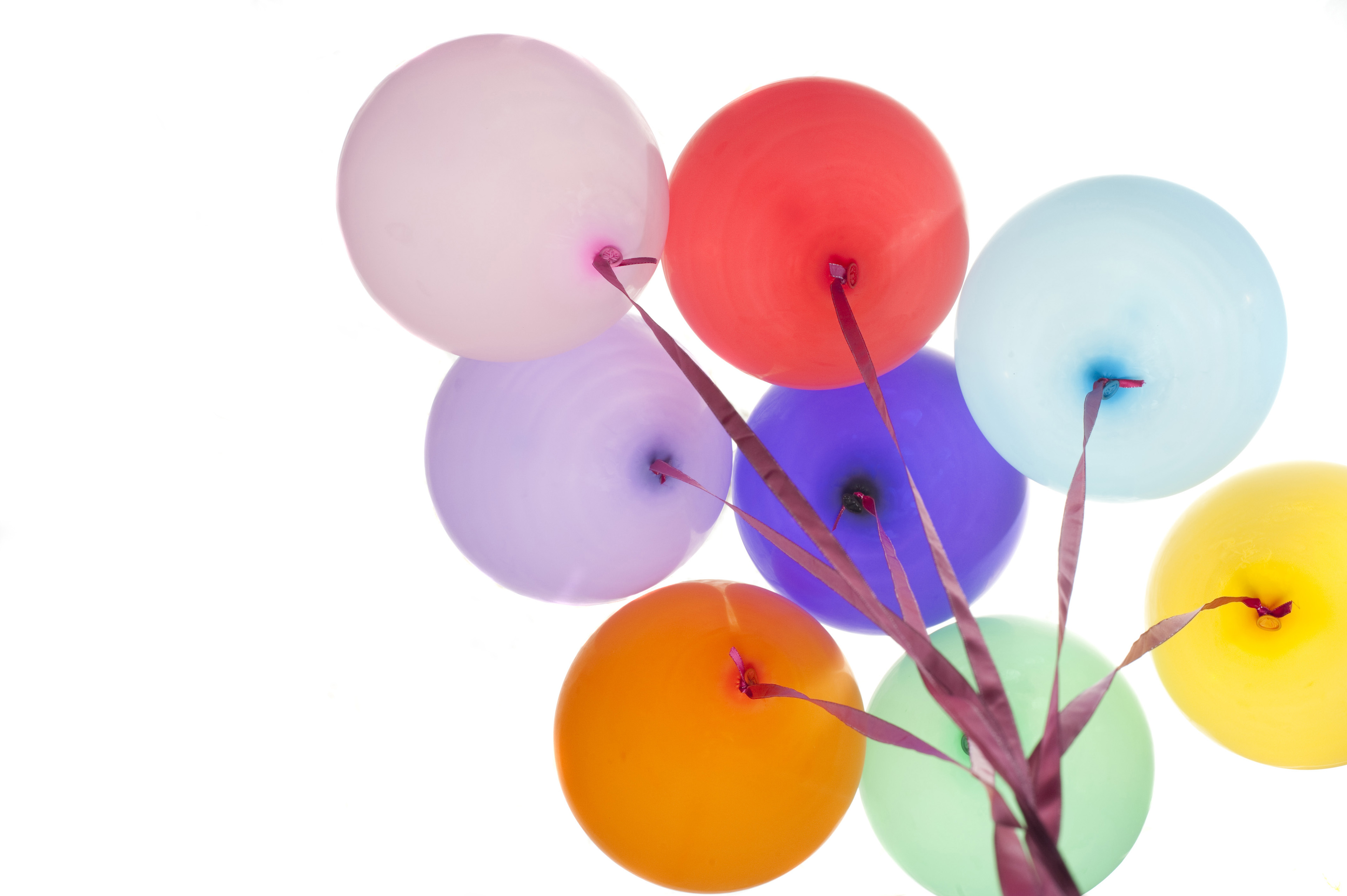 Close up Tied Plain Colored Balloons Isolated on White Background, Emphasizing Copy Space.