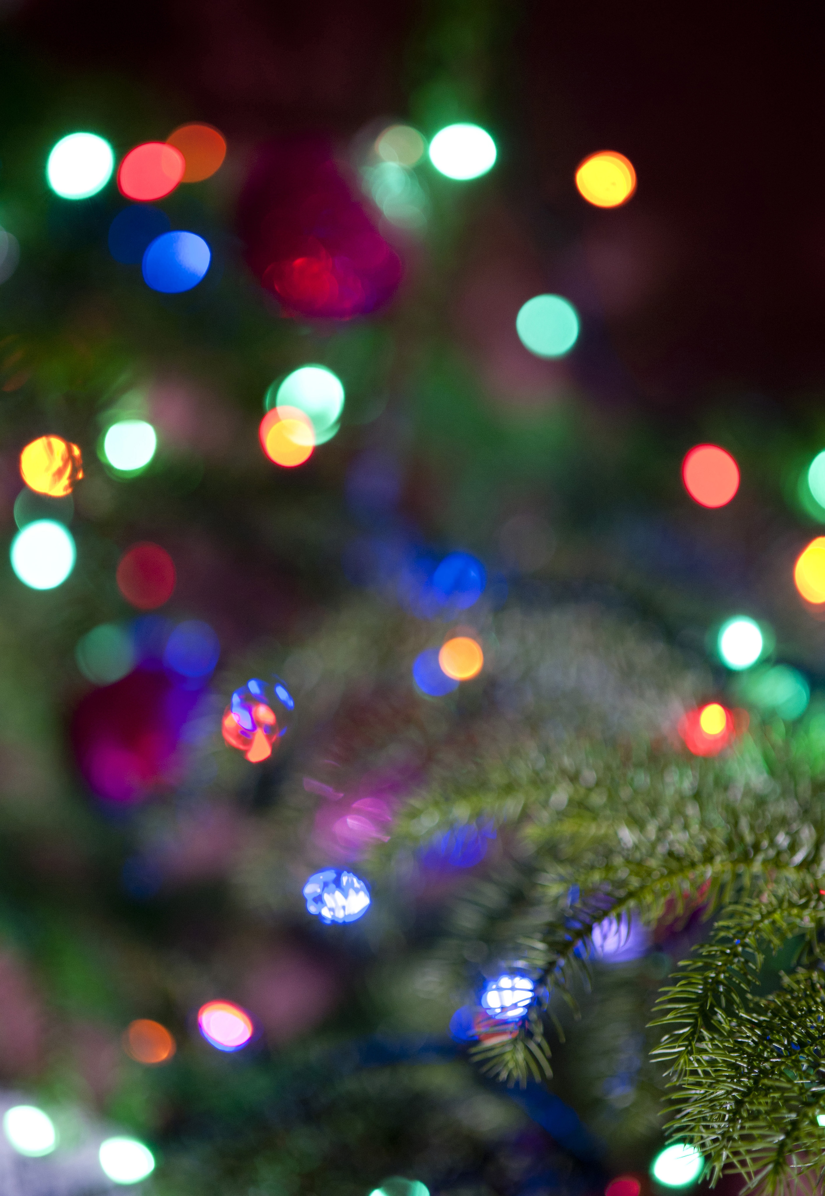 colorful sparkling christmas lights background bokeh with a branch of the christmas tree visible in the