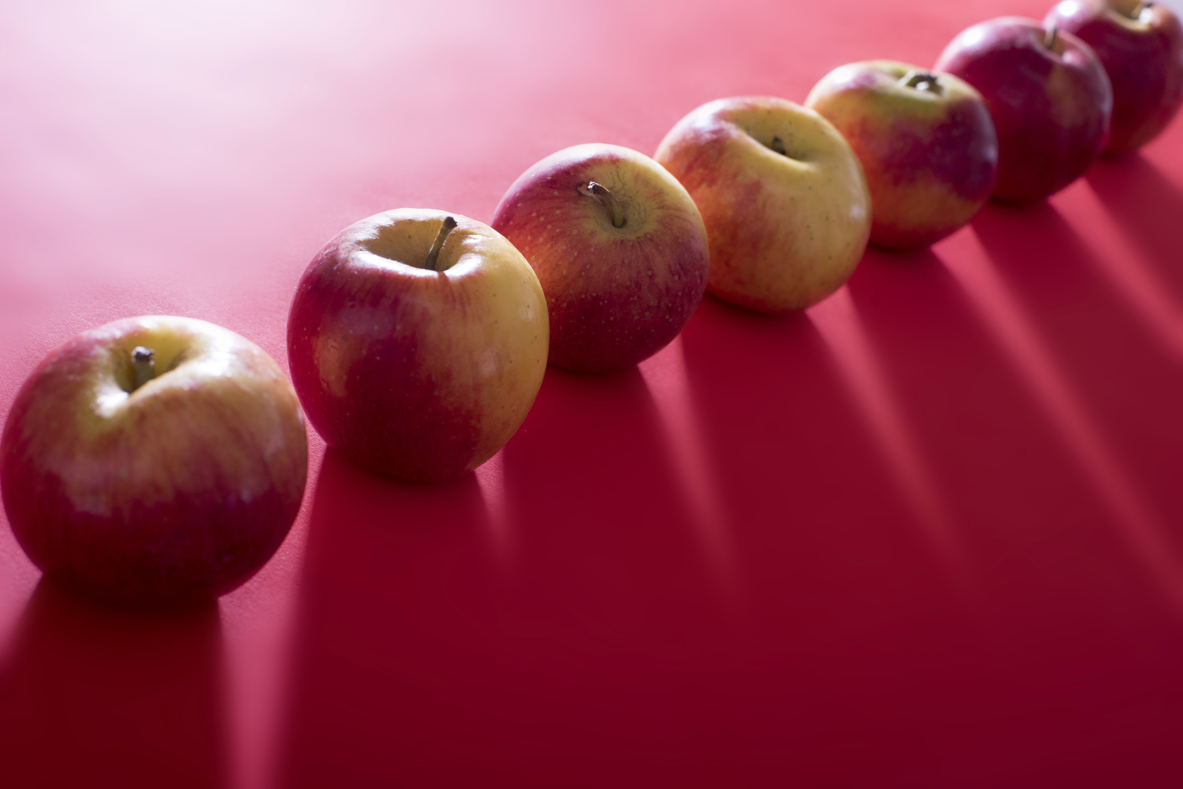 Diagonal line of fresh whole apples backlit on a festive red background casting a shadow over copy space