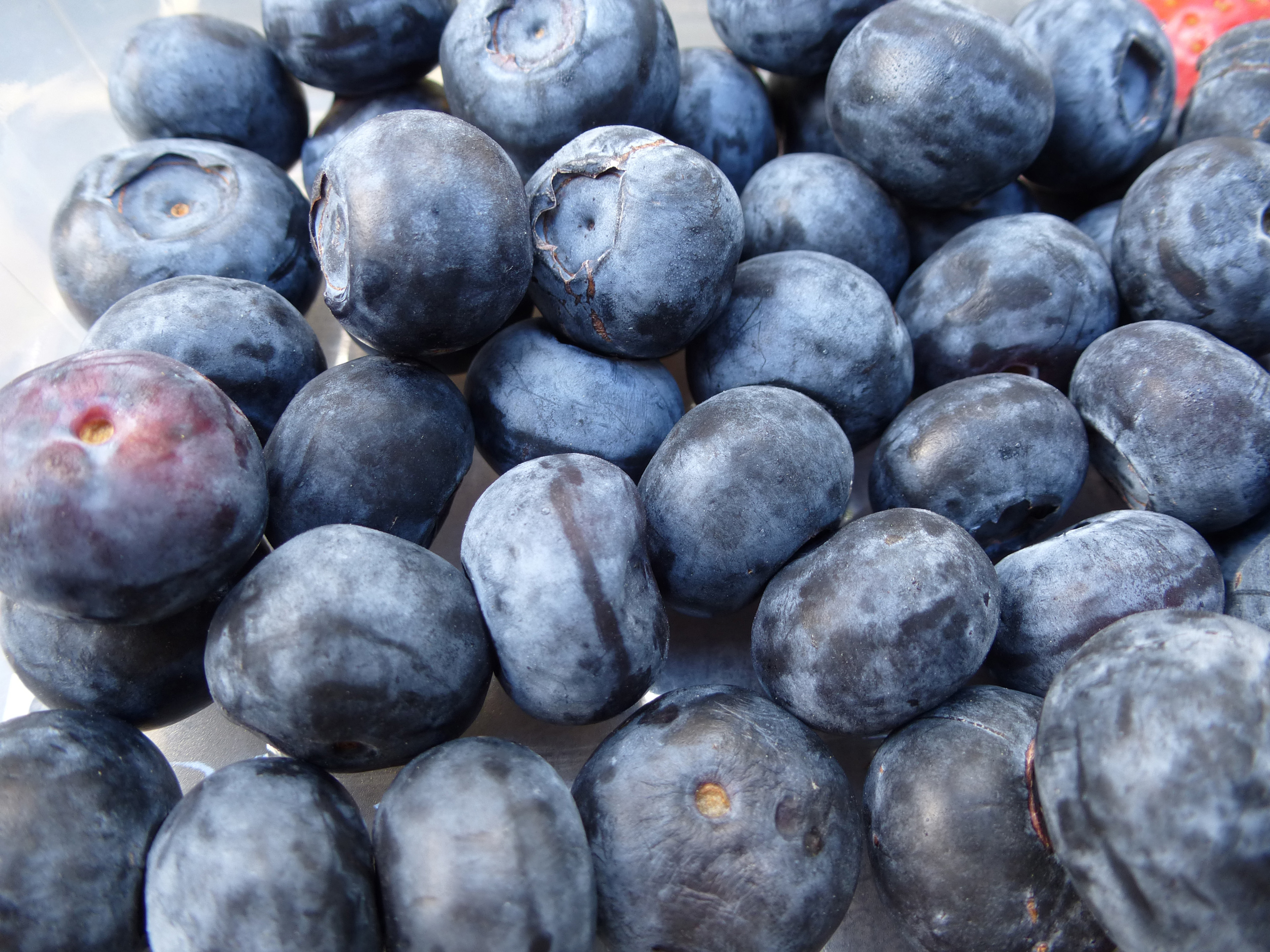 Close up background of fresh healthy raw blueberries for use as a cooking ingredient and dessert