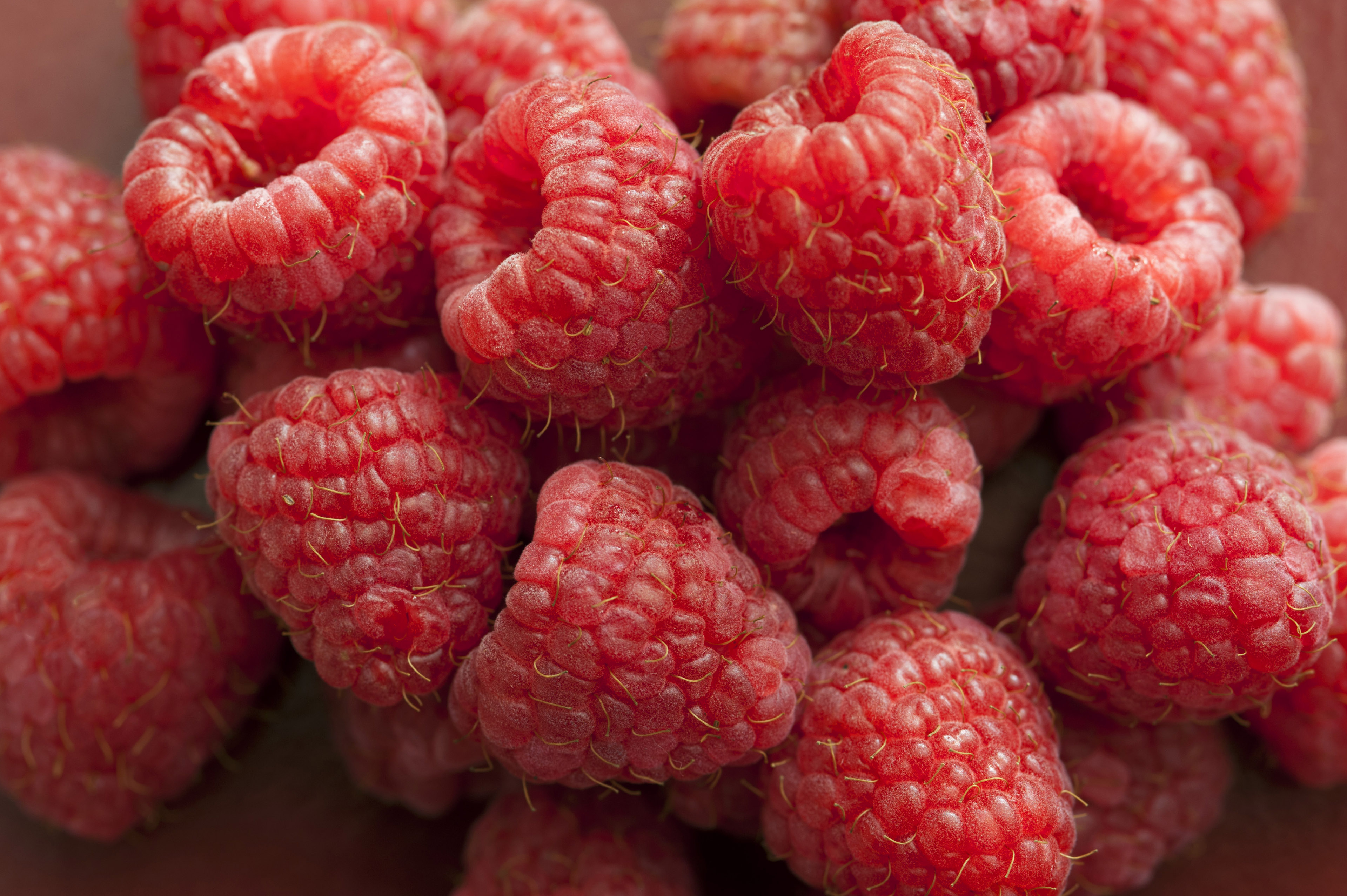 Pile of fresh red raspberries in close-up