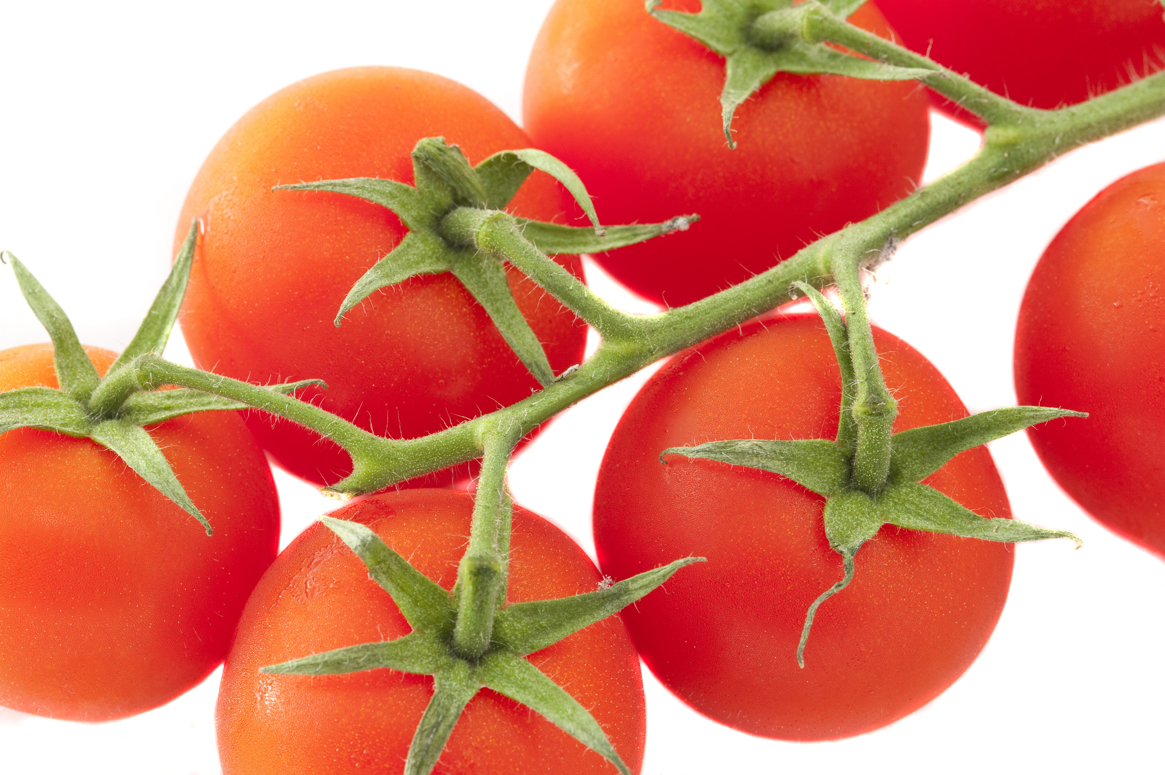 Still Life of Ripe Red Tomatoes on Vine as seen from Above on White Background