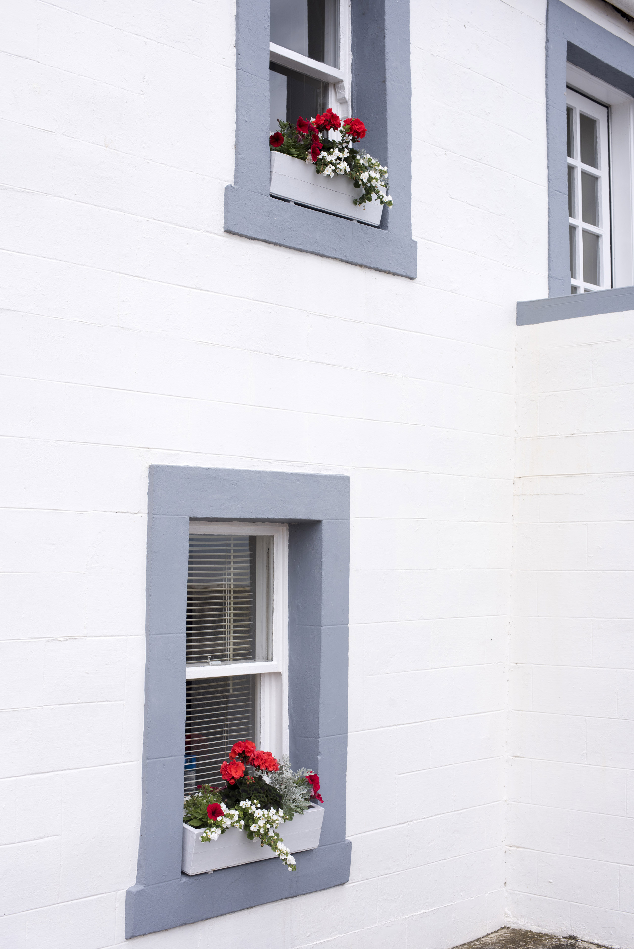 Colorful red and white flowers growing in window boxes in the grey windows of a whitewashed house in a close up background view