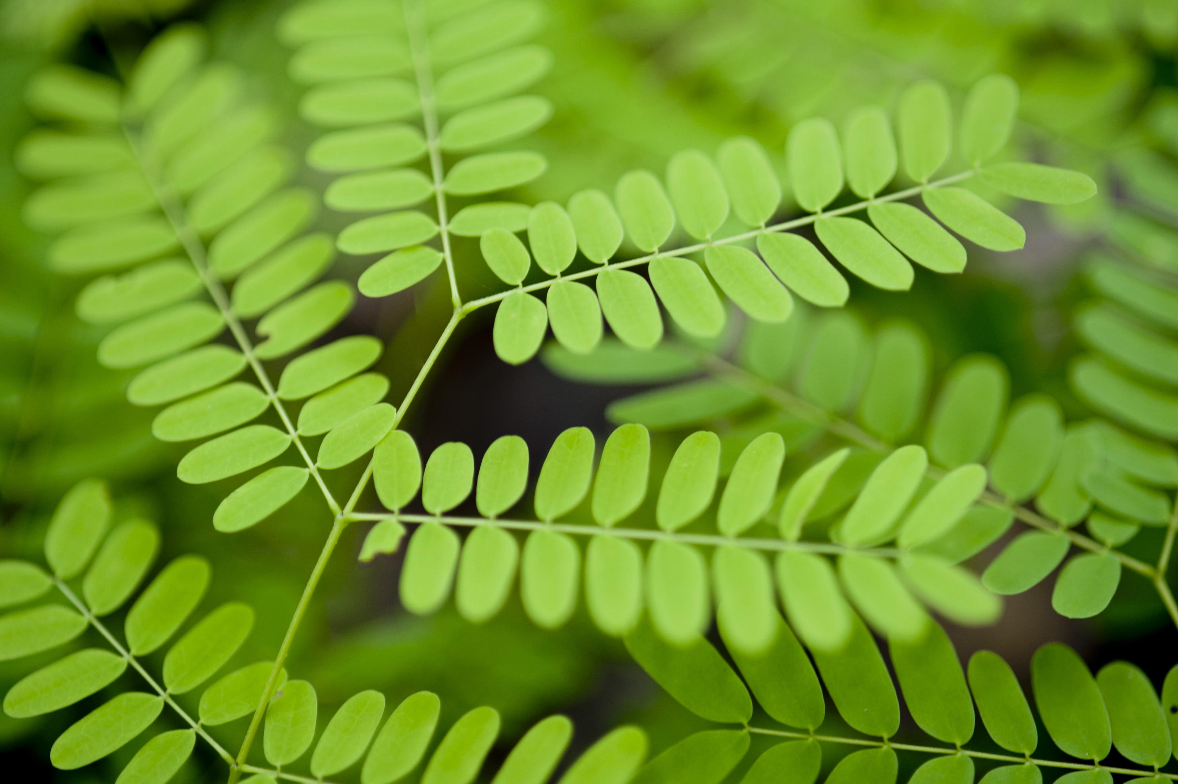 Closeup background texture photo of green plant fronds