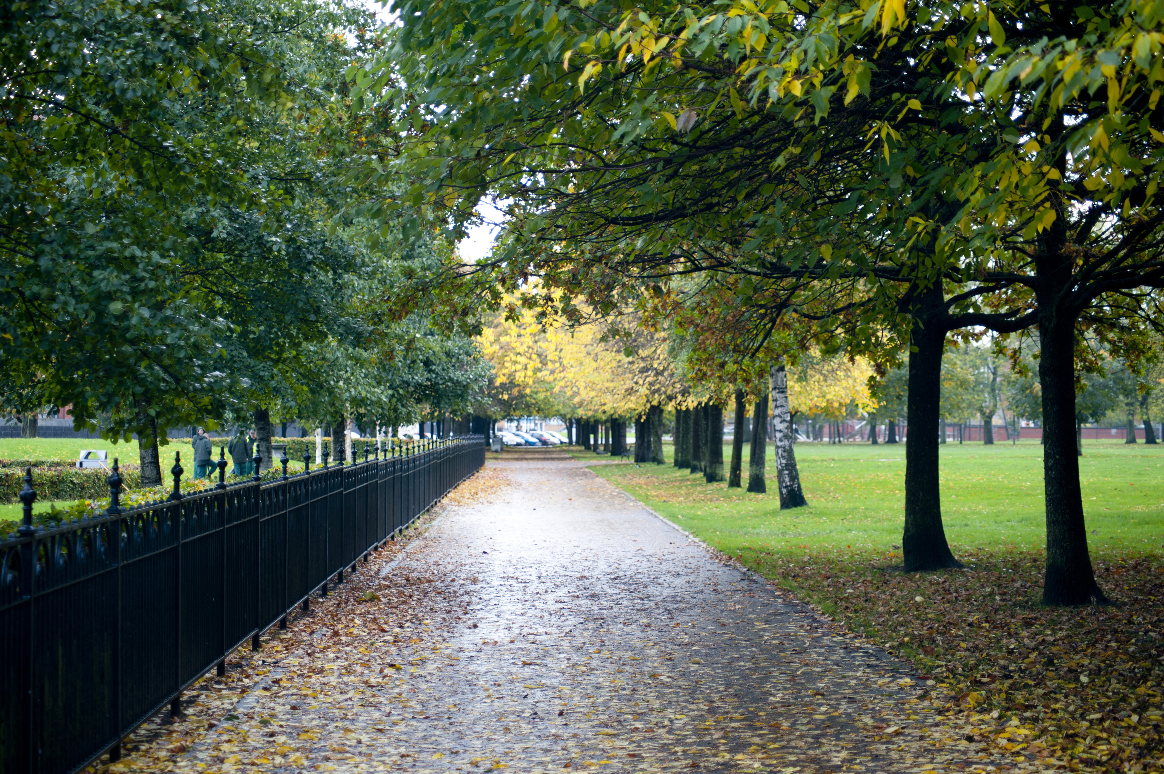 Picturesque tree lined footpath leading through an autumn park with colorful foliage and fallen leaves