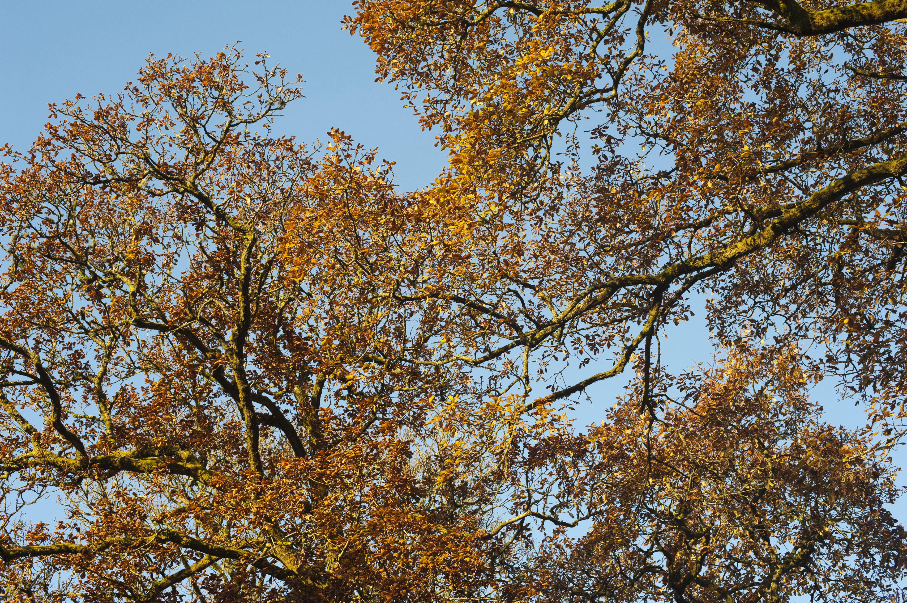 Colorful yellow and orange foliage on autumn trees symbolising the changing seasons and life cycles of nature