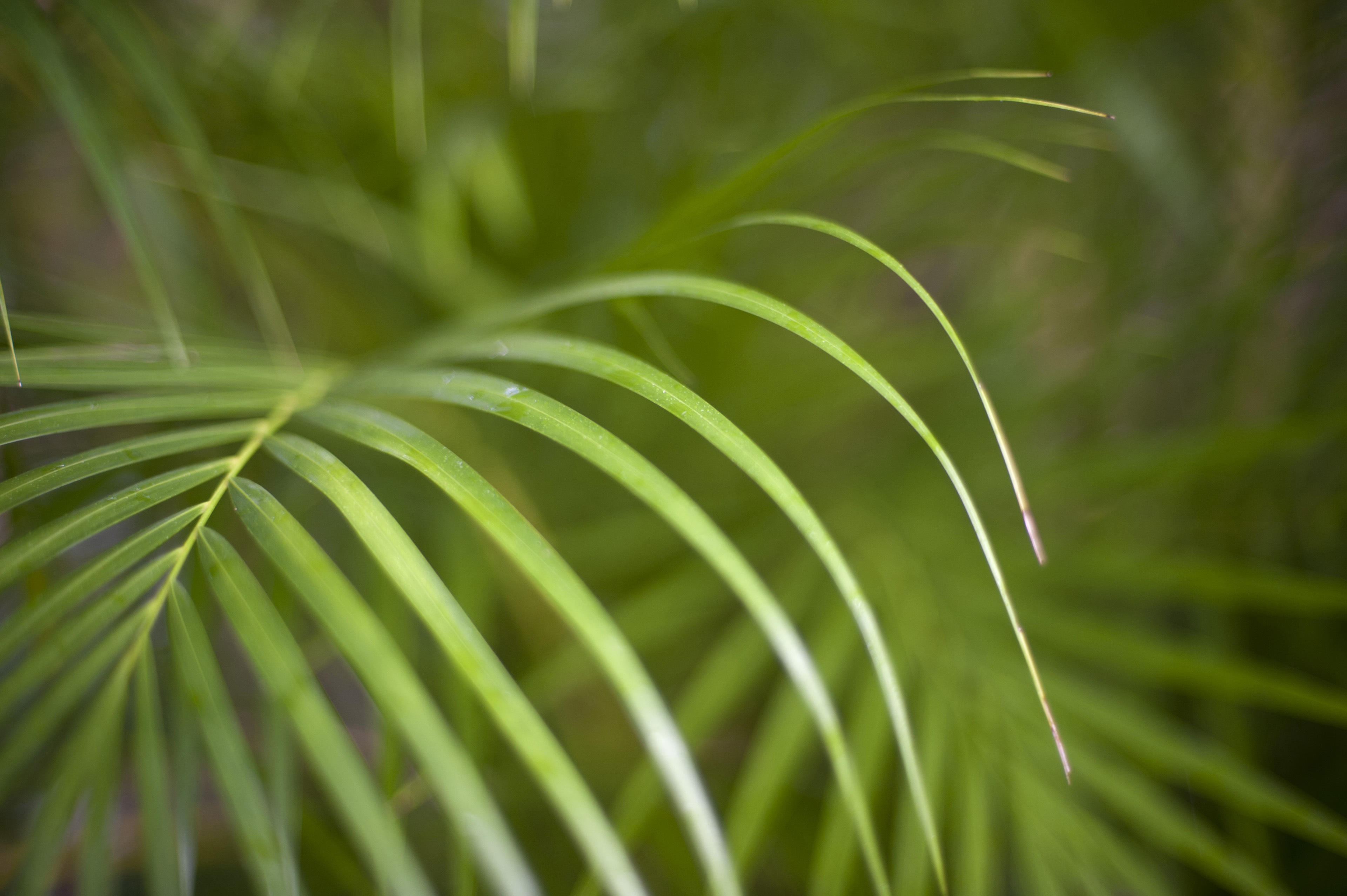 Nature Detail of Lush Green Tropical Fronds in Forest, Selective Focus on Fresh Plant Vegetation