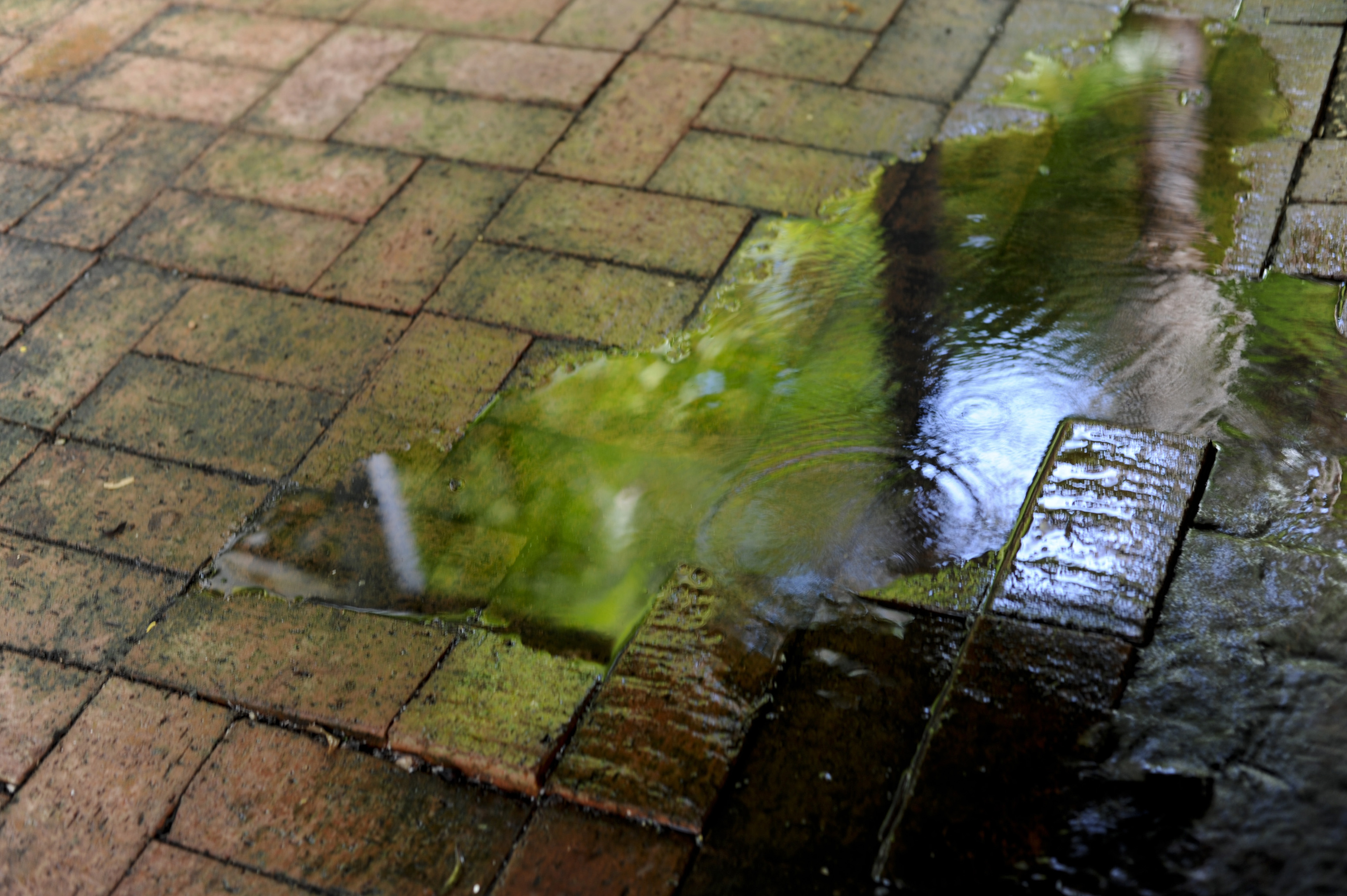Green vegetation reflected in a puddle of rain water on brick paving outdoors in a garden